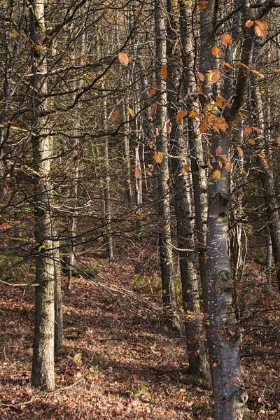 Autumn Colours, Penmanshiel by milepost46