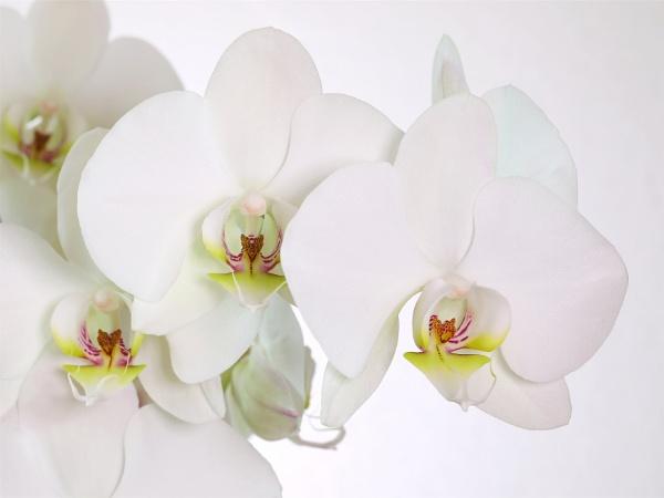 White on White by boov