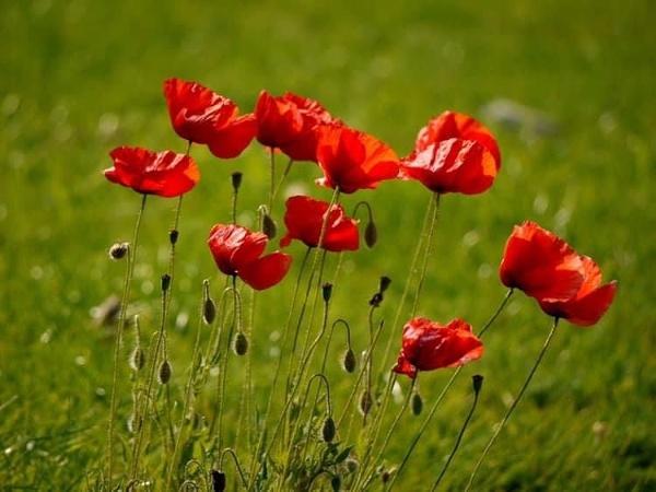 Armistice Day by DerekHollis