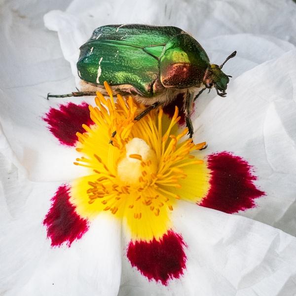 Walking through the pollen by Agglestone