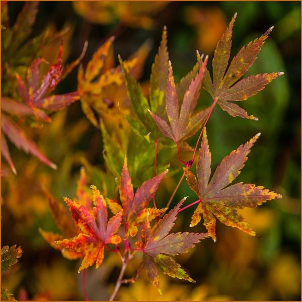 inbetweenie autumnal hues... by estonian