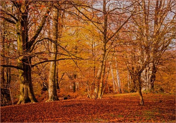 autumnal glow... by estonian
