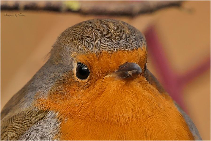 A Model Bird.