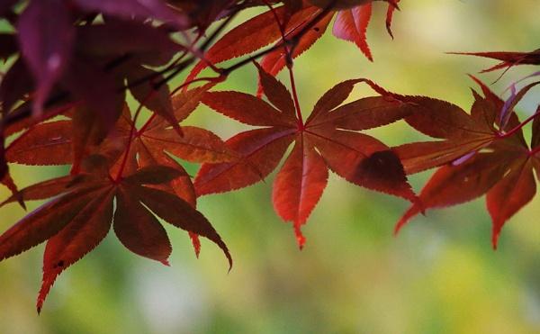 Autumn tree by LaoCe