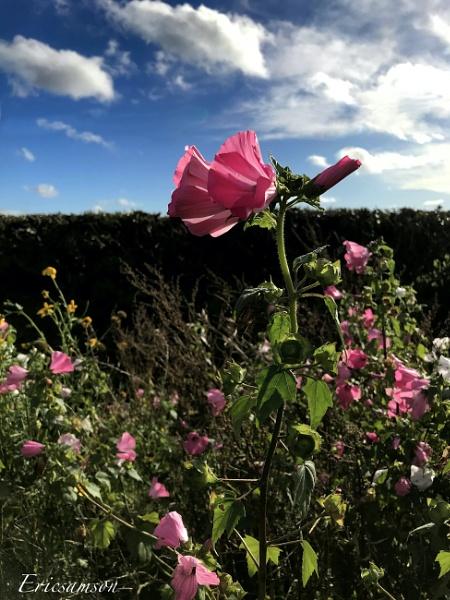 Hello sky, hello clouds, hello flowers ... by Ericsamson