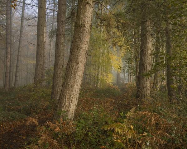 Woodland soft light by JelFish