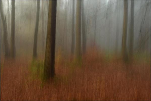 Mist in the Beechwood by MalcolmM