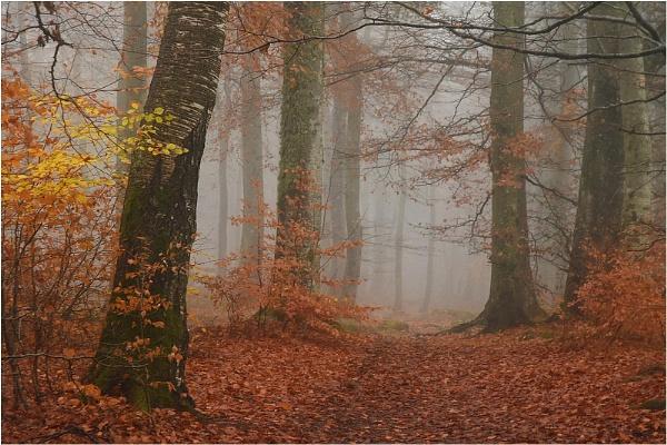 Mist in the Beechwood 2 by MalcolmM