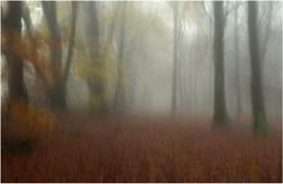 Mist in the Beechwood 3