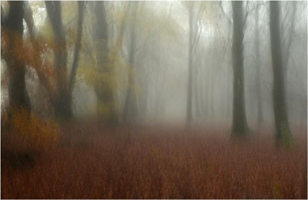 Mist in the Beechwood 3 by MalcolmM