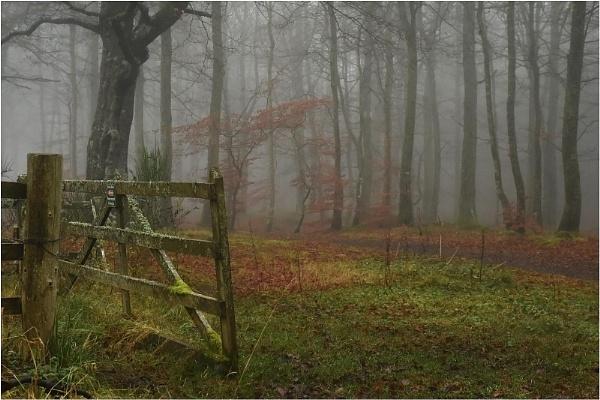 Mist in the Beechwood 4 by MalcolmM