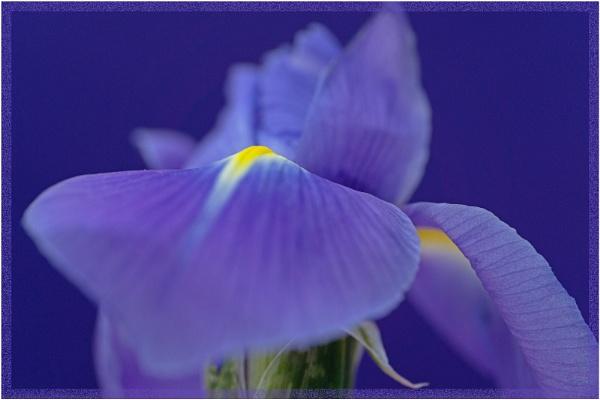 Iris 2 by SueB277