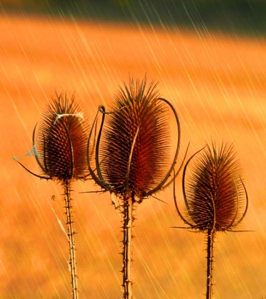 orange morning by elousteve