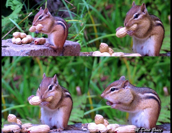 How to pouch a peanut by IamDora