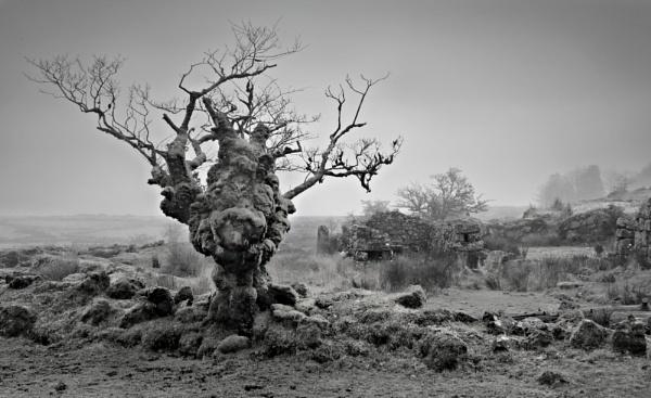 dreich Dartmoor by oldbloke