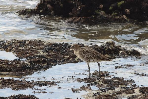 coastline wildlife by mark90d