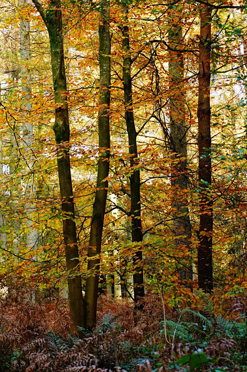 savnak forest