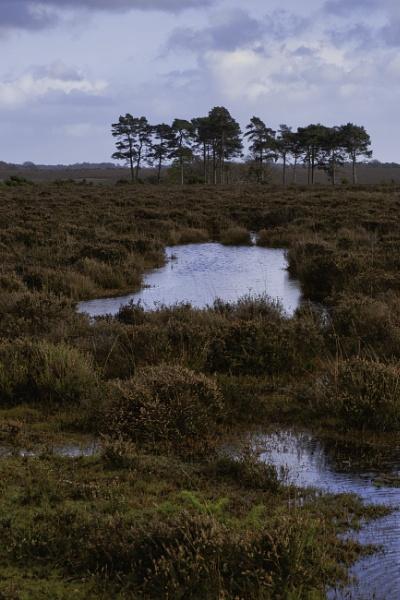 Flooded Heathland by paulb20