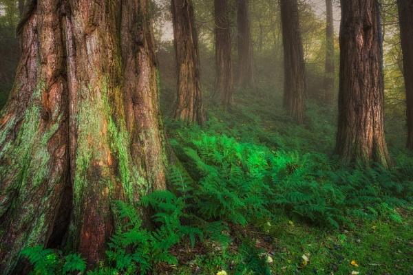 Giants in the Mist by douglasR