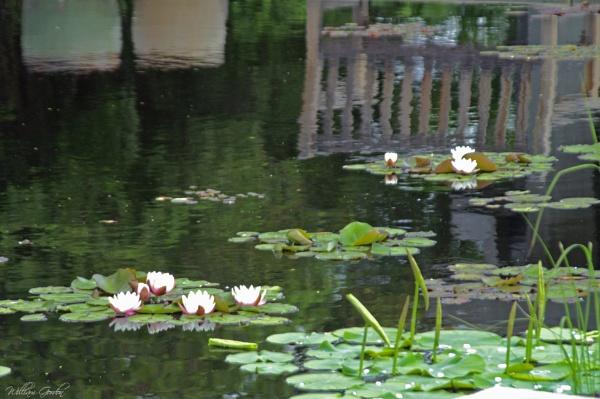 A Momentary Monet Moment by billgoco
