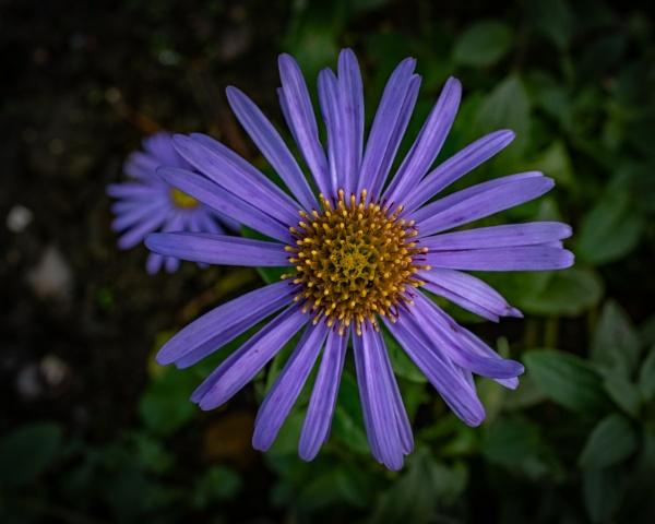 Flower by CRAIGR2