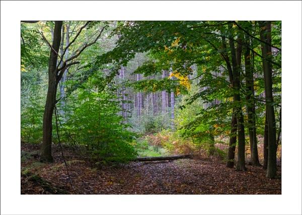Hanger Hill Wood by Steve-T