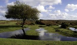Flooded Heathland