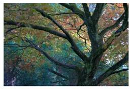 Pastel Canopy