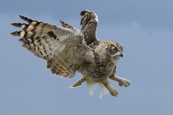 Eagle Owl by TerryMcK
