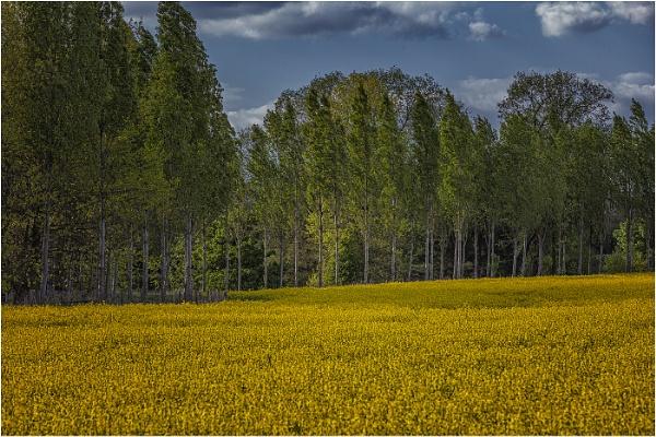 Field Of Dreams by stevenb