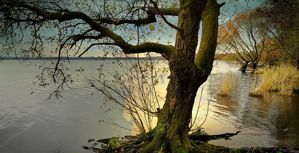 autumn in Antrim - Lough Neagh by atenytom
