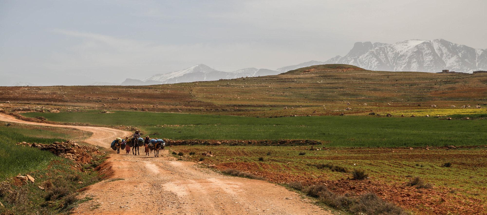 Mule Train Atlas Mountains Morocco