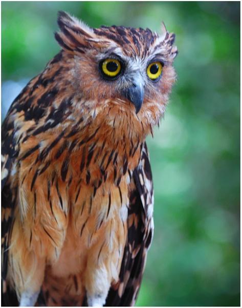A Eurasian Eagle Owl by gconant
