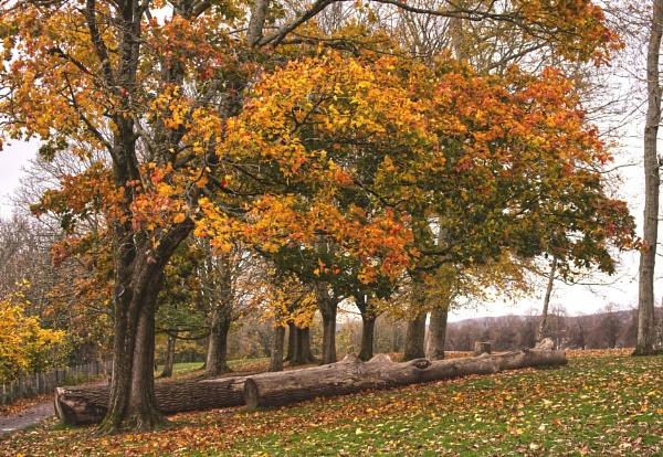 Autumn in Hailey Park by notsuigeneris
