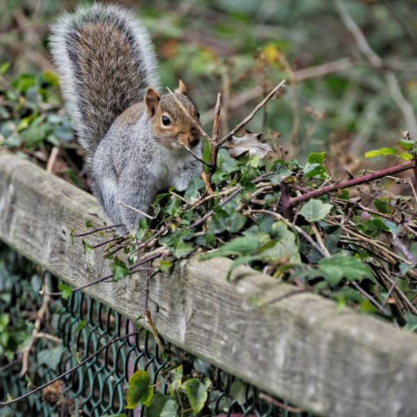 Squirrel by cats_123