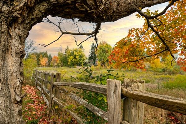 Fall Scene by manicam