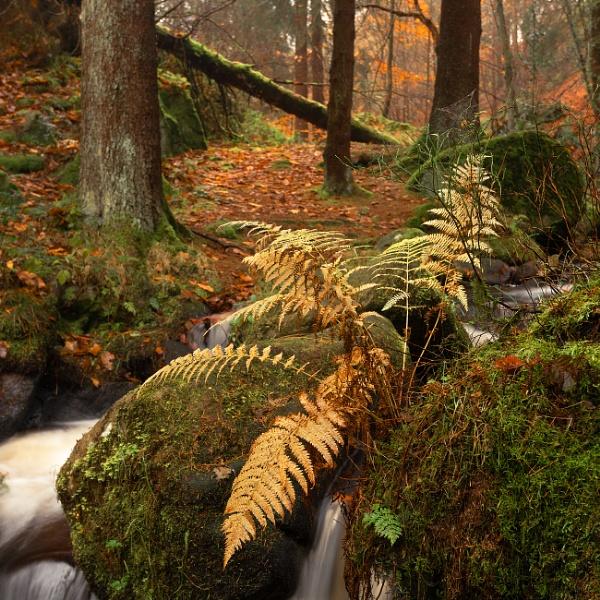 Golden Fern by Trevhas