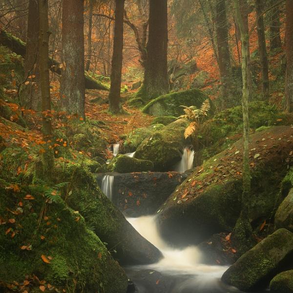Autumn Mist by Trevhas