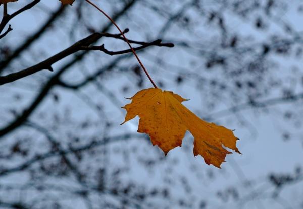 Autumnal Leaf 2 by Nikonuser1