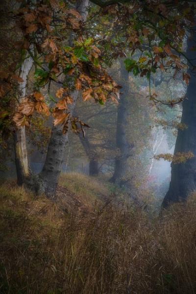 woodland by rocky41