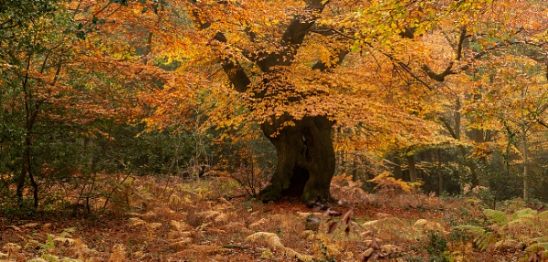 Autumn panoramic... by trusth