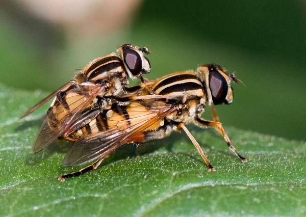 Entomologist needed by Karuma1970