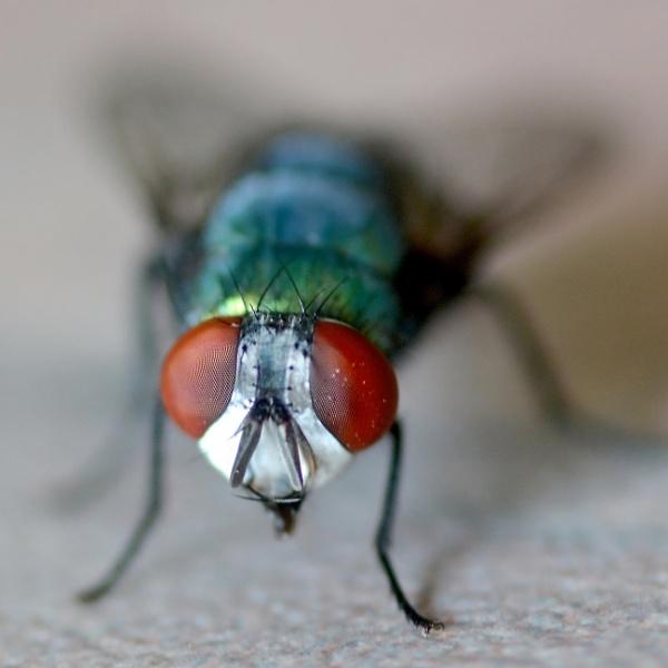 Fly eye!! by Coen
