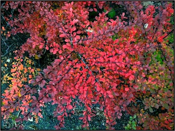 shades of red by FabioKeiner