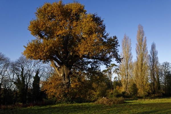 autumn by retroman