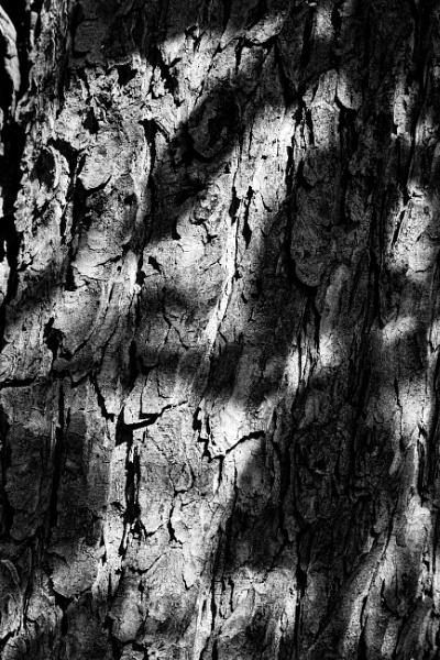 Light and shadow on tree bark