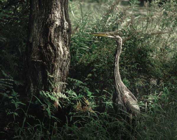 Heron by Alain