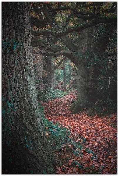 Woodland Walk. by Satlight