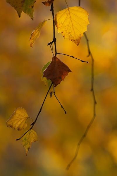 Autumn 45 by LaoCe