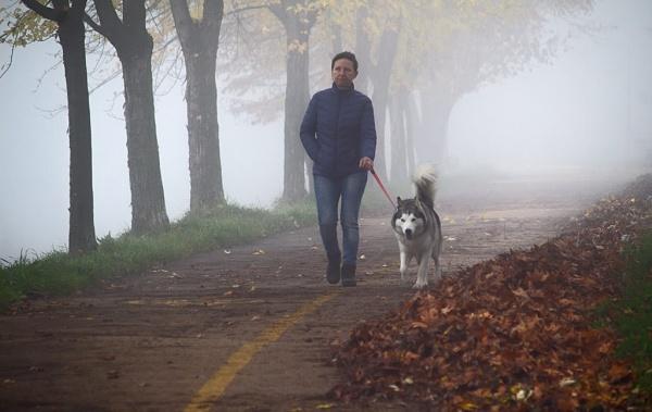 Dog walk by LaoCe